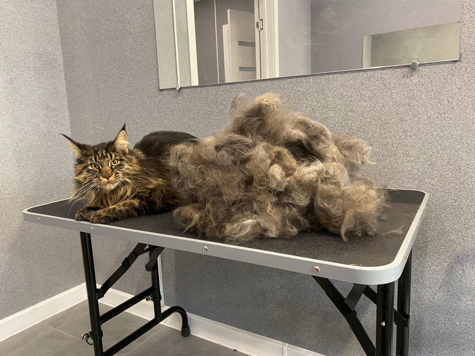 Вычес кота
