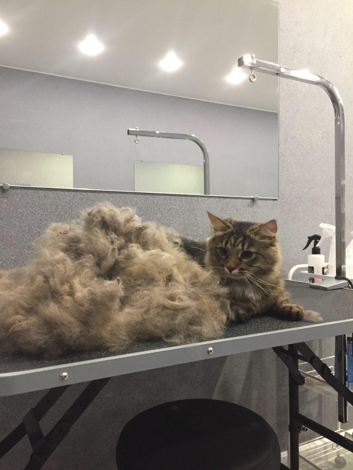 Экспресс линька для кошки